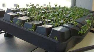розыгрыш на 1 апреля: клавиатура с травой